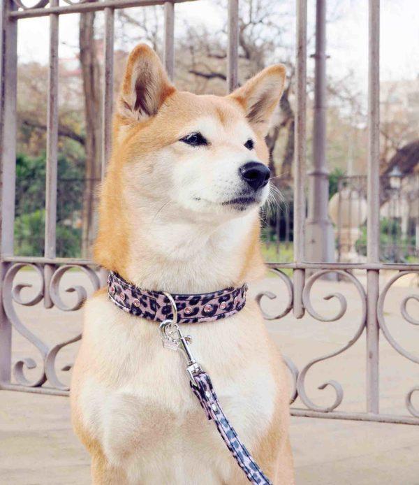 collares para perros Shiba Inu